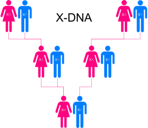 Universal test (Family Finder including X-DNA)
