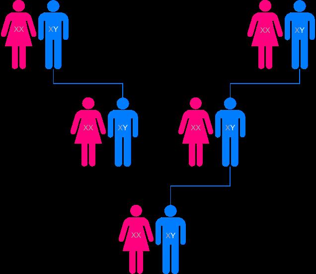 Paternal line (Y-DNA)